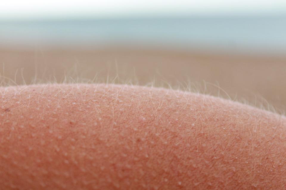 Illustration des petits poils de la peau par Monsieur Barbier via Shutterstock