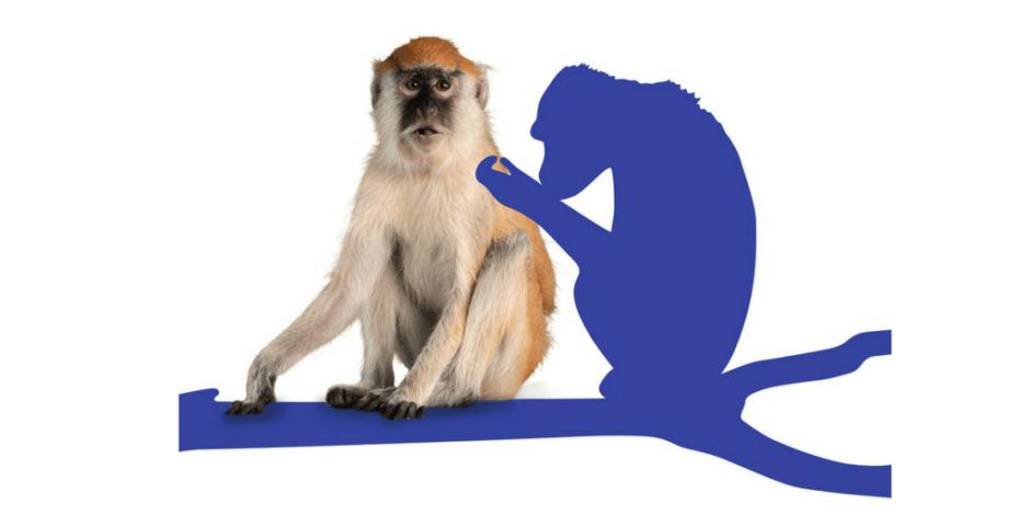 Dans notre dictionnaire du rasage, nous découvrons l'origine du mot grooming