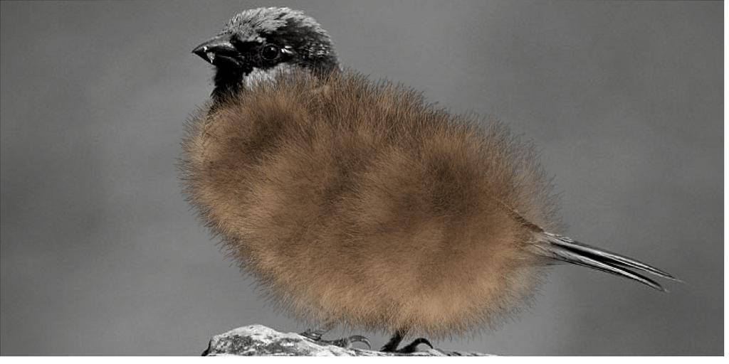 un moineau est une boule de poils à plumes