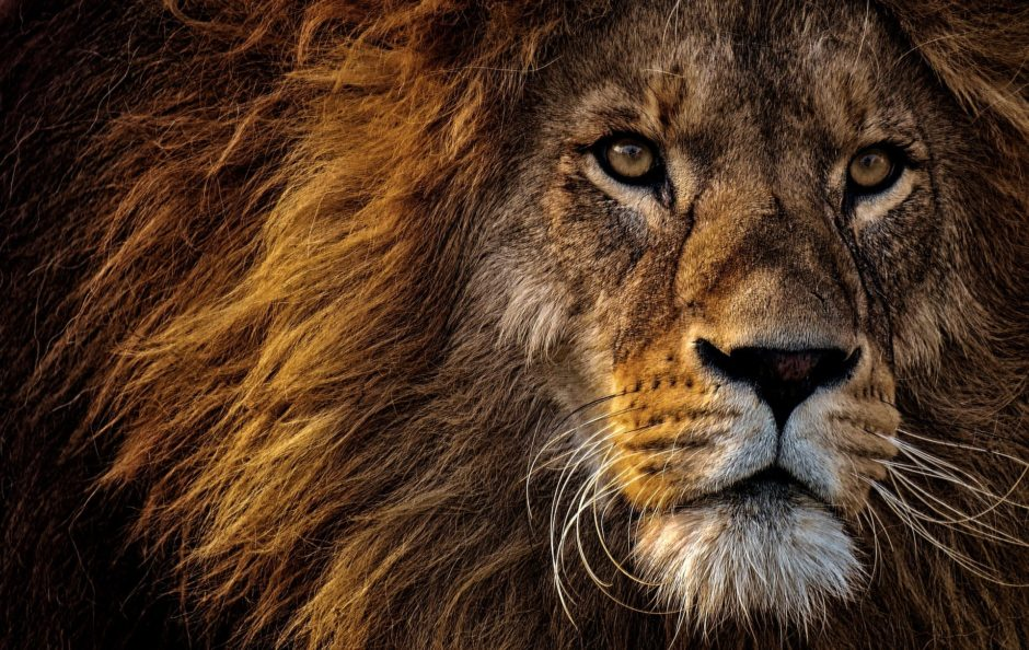 Aliments cheveux lion